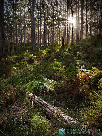 Boranup Forest - Image by Craig Spittles Photography