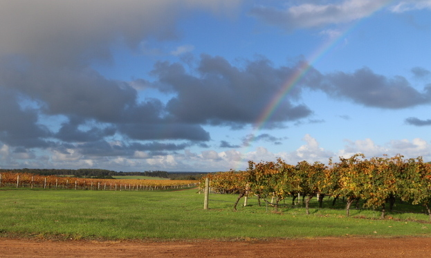 Redgate Winery Weddings rainbow perfect