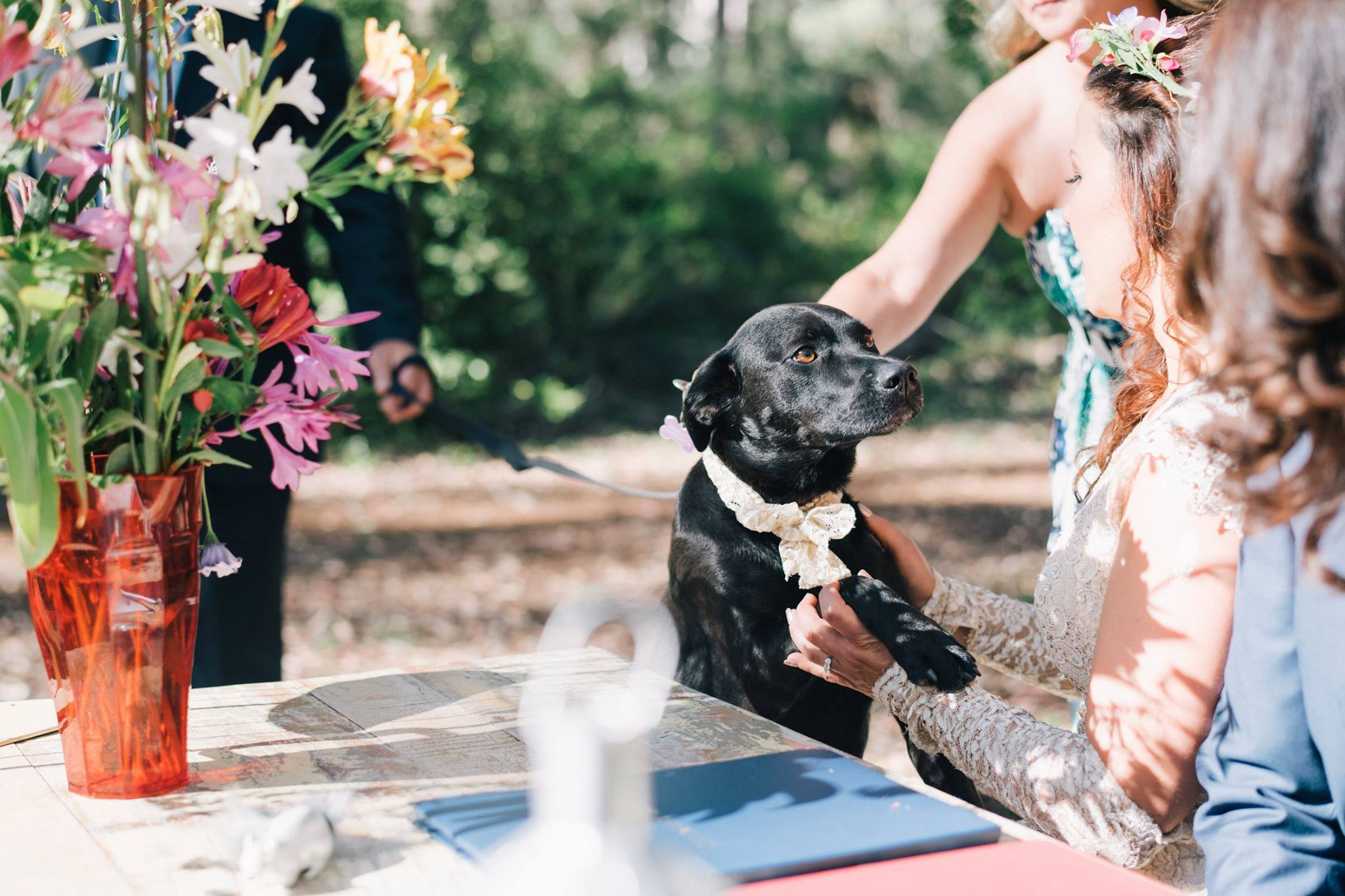 Pets in Ceremonies with Joanne Armstrong Marriage Celebrant